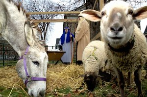 33_51_arts_livingnativity02_z
